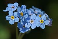Flower-6861-s