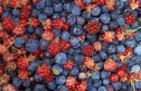 alaska berries #1