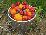 alaska  berries #2