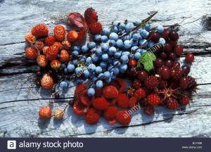 wild-berry-collection-from-alaska-glacier-bay-alaska-glacier-bay-alaska-BJ1A96